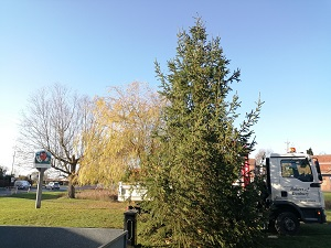 Danbury Essex Christmas Tree, Bakers of Danbury